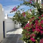 bougainvillea si case albe insula Mykonos