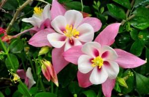 10 flori perene perfecte pentru solurile argiloase