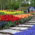 camp cu flori de primavara in fata casei