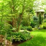 colt gradina amenajat sa imite un peisaj natural plante si arbusti de padure