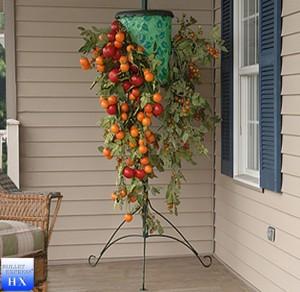 cultivare rosii suspendate cu capul in jos in balcon apartament