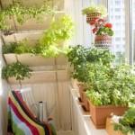 cultivare zarzavaturi si legume in balcon mic apartament