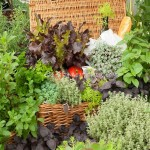 Plante aromatice, savoare si sanatate din gradina