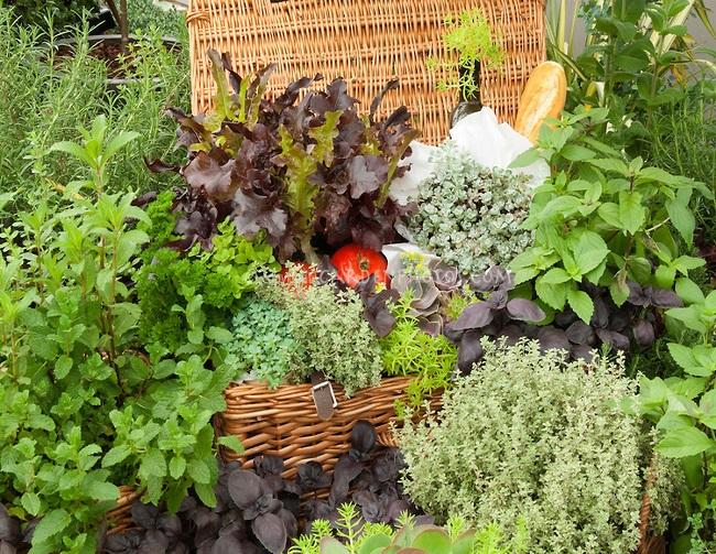 cultivarea plantelor aromatice in gradina casei