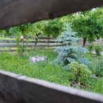 Furt de experienta in cresterea pasarilor de curte si cultivarea legumelor, de la vinituri