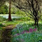 decor salbatic rustic gradina cu plante si flori de padure