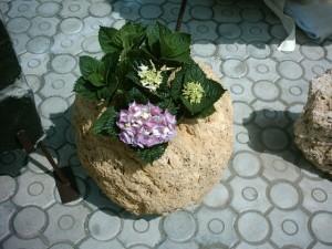 decoratiune piatra cu plante