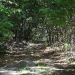 drum prin padure 2