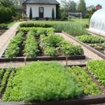 Gradini de legume in straturi inaltate – frumoase si practice