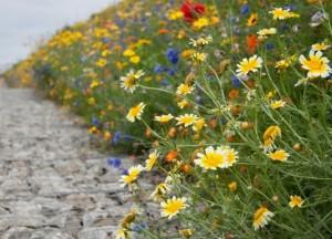flori de camp in gradina casei