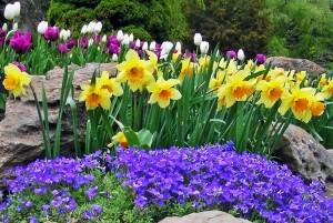 flori de primavara in gradina casei
