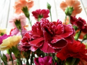 flori garoafe rosii
