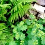 flori si plante salbatice aranjament decorativ gradina