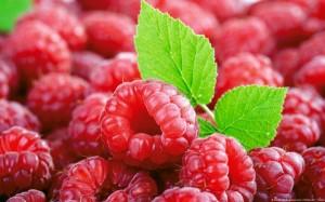 fructe arbust zmeur