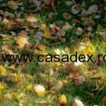frunze uscate (2)