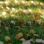 frunze uscate (3)