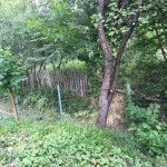 De la cititori: Cum mi-am renovat casa de la distanta – Gardul
