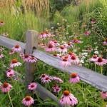 gard rustic intre flori de camp decor poienita de padure in gradina