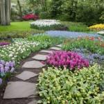 gradina cu flori de primavara zambile lalele si violete