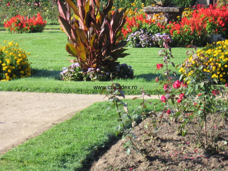 Ingrijirea plantelor si arbustilor ornamentali – tunderea