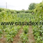 Sfaturi utile in plantarea legumelor
