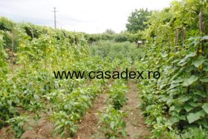 gradina de legume august