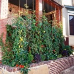 gradina de legume cultivate in balcon