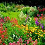 Flori anuale de vara in gradina