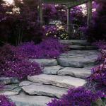 gradina frumoasa decorata cu flori violet
