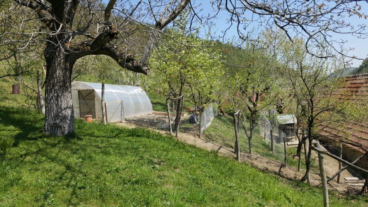 gradina-noastra-de-legume-poza-de-la-vecinul