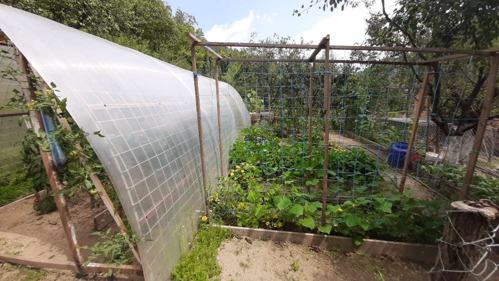 gradina noastra legume si solar