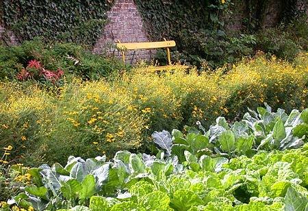 gradina plante companion