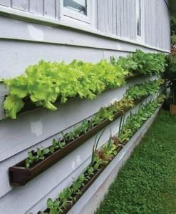 idei cultivare salata verde ceapa verde si plante aromatice in balcon