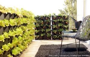 idei cultivare salata verde si capsuni in gradina verticala montata pe perete