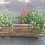 jardiniera 2