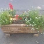 model jardiniera
