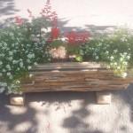 jardiniera piatra
