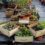 jardiniera handmade din chitara veche