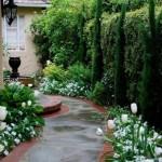 lalele albe inflorite de-a lungul aleilor din curtea casei