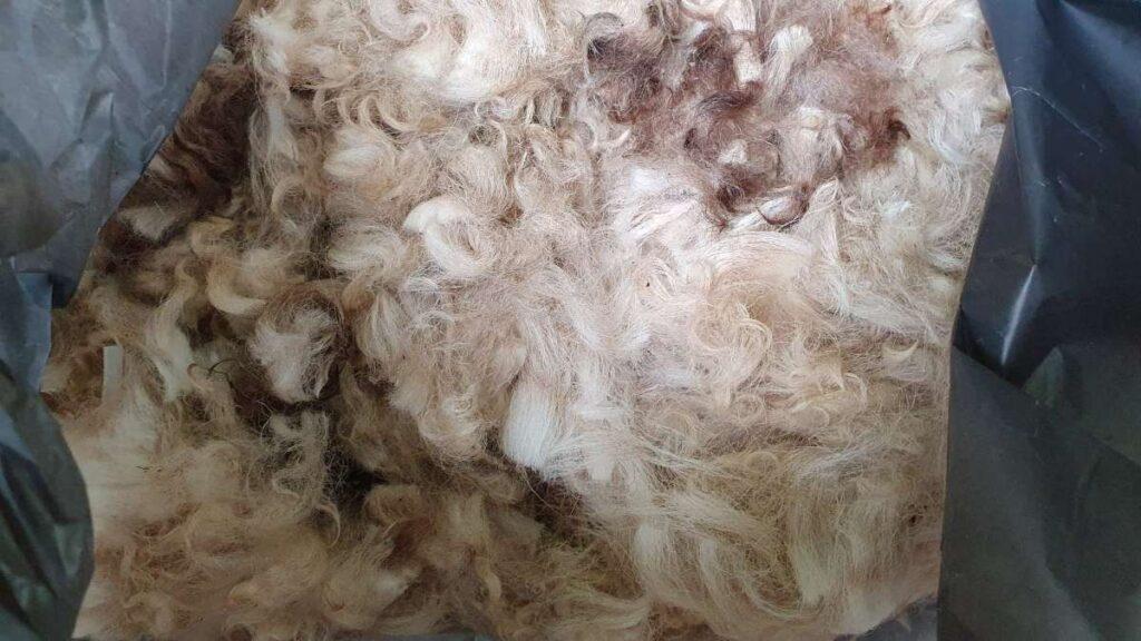 lana de la oile noastre