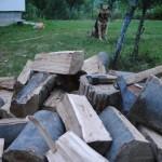 lemne pentru centrala