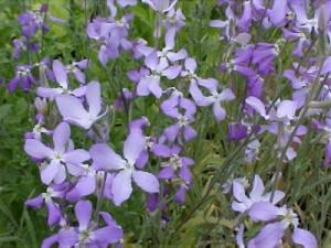 Mixandra, parfumul magic al serilor de vara