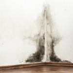 Cauzele mucegaiului si cum luptam impotriva lui