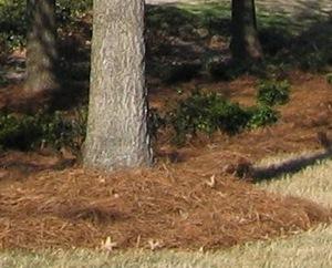 Compostul si mulcirea solului, doua secrete in reusita amenajarii unei gradini