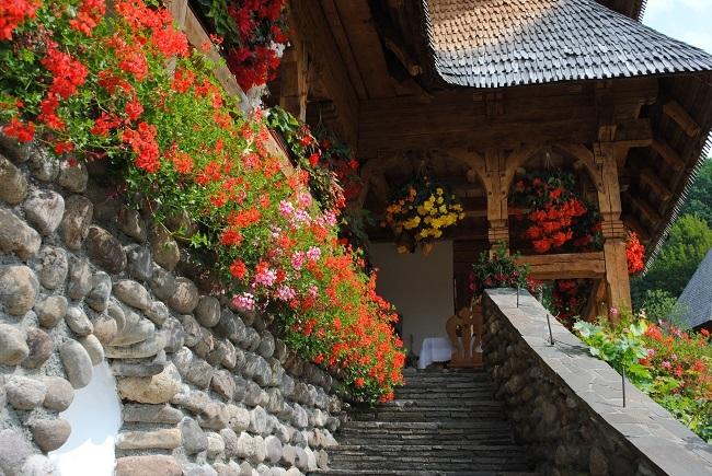 muscate curgatoare la Manastirea Barsana Maramures