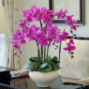orhidee mov inflorita planta decorativa de interior