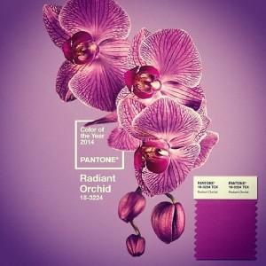 orhidee radianta sau roz purpuriu culoarea anului 2014 pantone