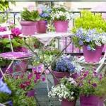 Plante si flori pentru balcon – alegere si ingrijire