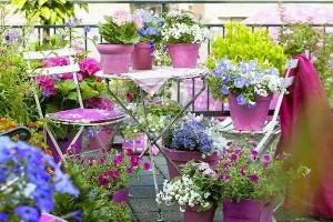 petunii si alte flori colorate decor balcon apartament