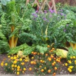 Plante Companion: cum invecinam plantele si legumele din gradina (partea 1)